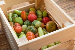 Rewolucjonistki i zieleni pomidory na drewnianym tle Pomidorowy żniwo obraz royalty free
