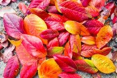 Rewolucjonistki, pomarańcze i koloru żółtego jesieni liści tło, Zdjęcia Stock