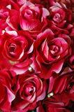 Rewolucjonistki róża Obrazy Royalty Free