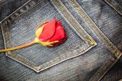 Rewolucjonistki róża na cajg tkaninie fotografia stock