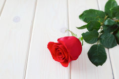 Rewolucjonistki róża na drewnianym tle Obraz Stock