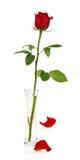 Rewolucjonistki róża w wazie i dwa płatkach obrazy royalty free