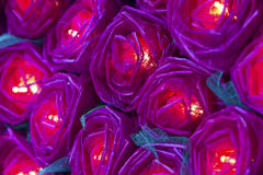 Rewolucjonistki róży światło Obrazy Royalty Free