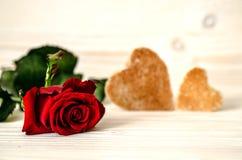 Rewolucjonistki róży lying on the beach na bielu drewniana powierzchnia W tle są w postaci serc dwa grzanki Zdjęcie Royalty Free