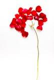 Rewolucjonistki róży płatki Zdjęcie Stock