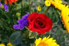 Rewolucjonistki róża i Perez ` s lawenda Zdjęcie Royalty Free