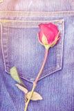 Rewolucjonistki róża na cajg tkaniny tle Obraz Stock