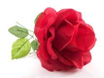 Rewolucjonistki róża odosobniony Obrazy Stock