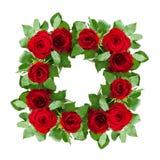 Rewolucjonistki róży kwiatów rama Fotografia Royalty Free