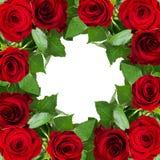 Rewolucjonistki róży kwiatów rama Obrazy Stock