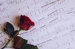 Rewolucjonistki róża z muzykalnymi notatkami Zdjęcia Stock