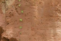 Rewolucjonistki tekstury glebowy tło Obrazy Stock