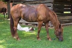 Rewolucyjny Wojenny Reenactor i koń zdjęcie royalty free