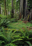 Rewood forest Stock Image