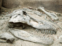 rex暴龙 免版税库存照片