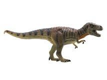 rex暴龙 免版税库存图片