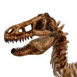 rex σκελετός τ Στοκ Εικόνα