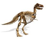 rex τυραννόσαυροι σκελετώ& διανυσματική απεικόνιση