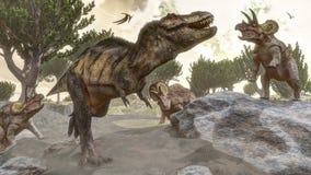 Rex тиранозавра избегая от нападения трицератопс Стоковое фото RF