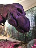 rex 免版税库存图片