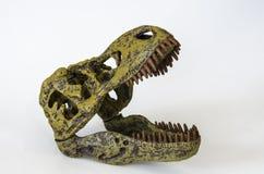 恐龙在白色背景的rex的头骨 库存图片