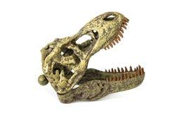 恐龙在白色背景的rex的头骨 免版税库存图片