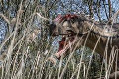 Rex asustadizo Dino de los dinosaurios T de Dino Fotos de archivo libres de regalías