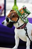 Rex de hond (Elvis-impersonator) Royalty-vrije Stock Afbeelding