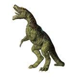 Rex de Tyrannosaurus de dinosaur sur le blanc Images libres de droits