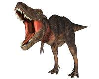 Rex del dinosauro di Dino che attaking Immagini Stock