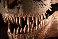 Rex del Tyrannosaurus Immagine Stock Libera da Diritti