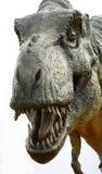 Rex del Tyrannosaurus del dinosauro su bianco Fotografia Stock