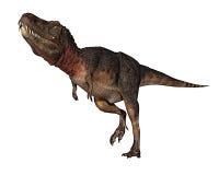 Rex do dinossauro de Dino que pensa aproximadamente Imagem de Stock