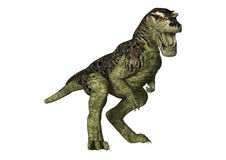 Rex do Tyrannosaurus do dinossauro no branco Imagem de Stock Royalty Free