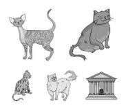 Rex persiano e della Cornovaglia ed altre specie Le razze del gatto hanno messo le icone della raccolta nelle azione monocromatic Fotografie Stock Libere da Diritti