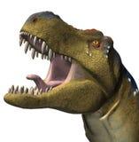 rex t динозавра Стоковое Изображение