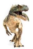 rex t royaltyfria bilder