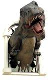 rex t Zdjęcie Royalty Free