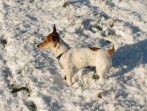 Rexa. My little puppy in Phoenix Park in Dublin Stock Photo