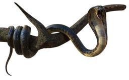 Rey Cobra Snake con la trayectoria de Cliping stock de ilustración
