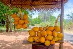 Rey Coconuts Are Displayed para la venta en pequeña parada del borde de la carretera en Sigiriya foto de archivo