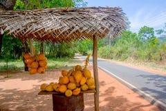 Rey Coconuts Are Displayed para la venta en pequeña parada del borde de la carretera en Sigiriya foto de archivo libre de regalías