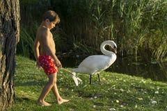 Rey de cisnes Fotos de archivo