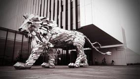 Rey del león Foto de archivo libre de regalías