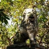 Rey del león Fotografía de archivo libre de regalías
