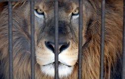 Rey detrás de barras. Imagen de archivo libre de regalías