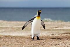 Rey Penguin Fotografía de archivo libre de regalías