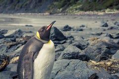 Rey Penguin Imágenes de archivo libres de regalías