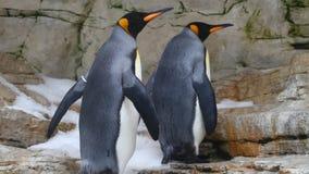 Rey Penguins metrajes