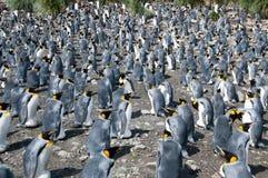 Rey Penguins en los llanos de Salisbury foto de archivo libre de regalías